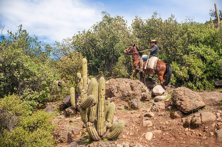 Photo by Kim Walker. Victor guides his horse through rocks and cactus near a horse farm in El Toyo region of Cajon del Maipo, Chile, South America. See more great photos on Kim's excellent Travel/Photo blog post - COWBOYS & HORSES IN CAJON DEL MAIPO, CHILE - http://www.uniquetravelphoto.com/?p=2221