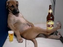 Perro cerveceando