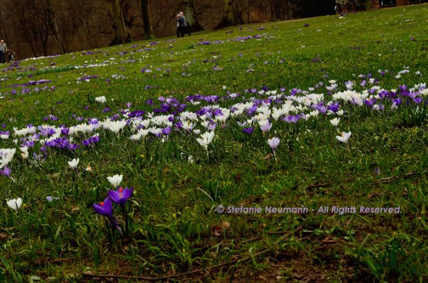 "ONENESS IN DIVERSITY by Stefanie Neumann: ""We all have a unique voice to contribute to the sound of the All that Is.  Without your voice the universal choir is not complete."" #KBFExercises 