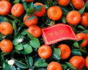 Mandarin Tree and Red Envelope
