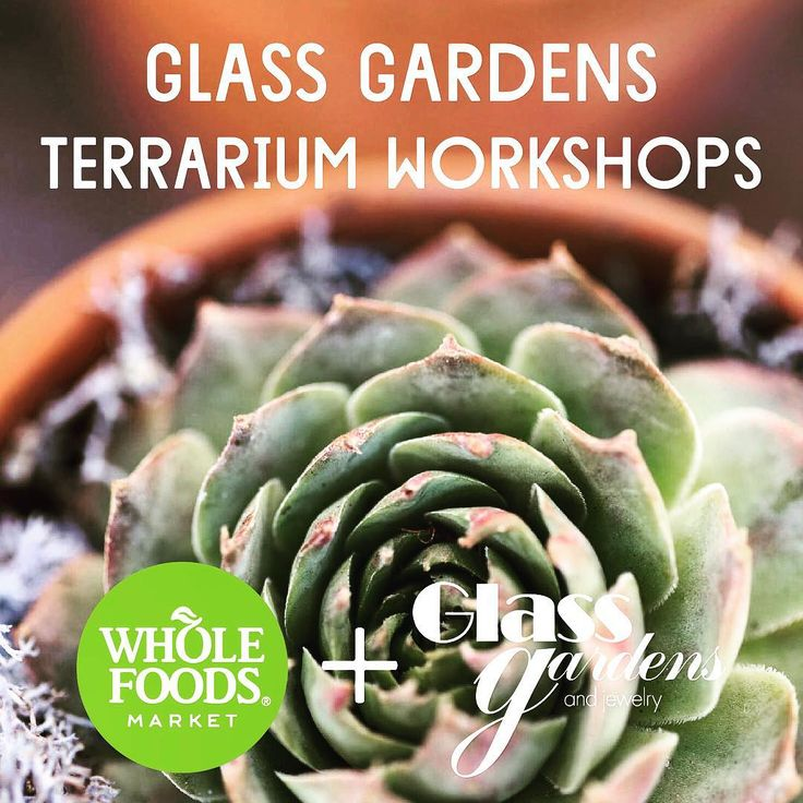 Look forward to our 23rd January #terrarium class @wholefoods #virginiabeach and January 30th #newportnews 10am #glassgardens #succulents #coffee #wholefoodsmarket #wholefoods