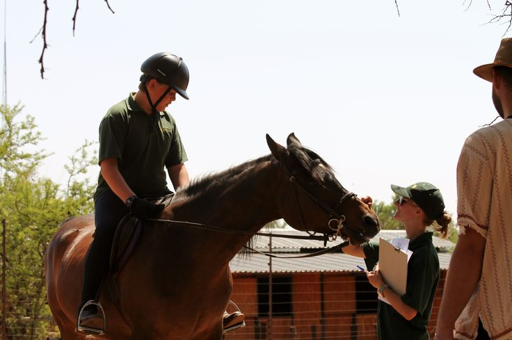 Hassan (another of Liberty's School Horses) begging for kisses from an instructor - Photo by Michael van Dyk