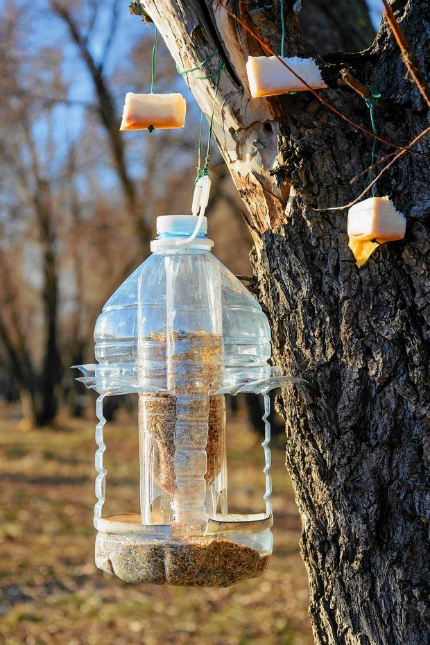 Zdjęcie numer 11 w galerii - Plastikowe butelki. 24 pomysły jak wykorzystać butelki w ogrodzie