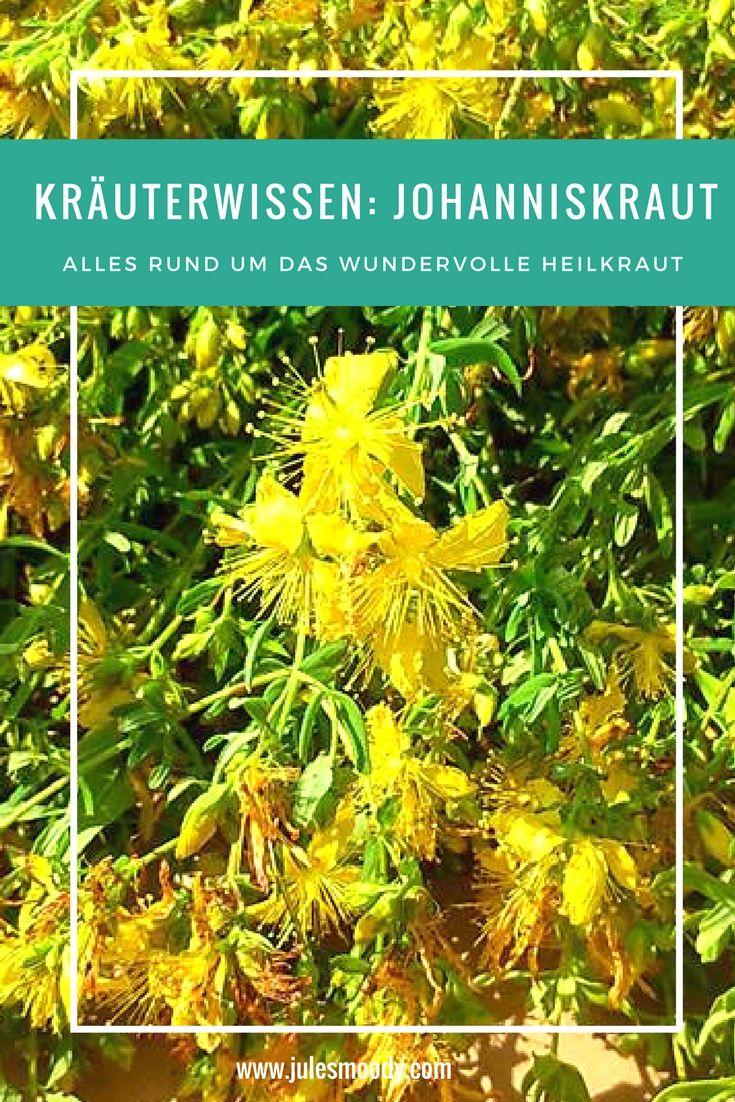 Alles wissenswerte über Johanniskraut als Heilkraut!