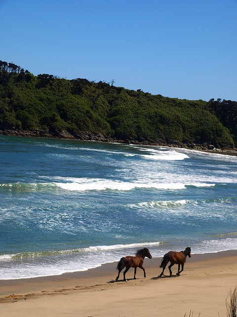Ride horses on the beach. [Chiloé, Chile]