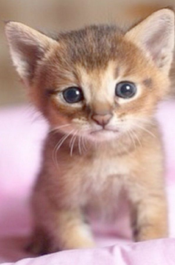Cute Animals Made Out Of Keyboard Symbols For Domestic Kittens For Sale Near Me Kittens Cutest Cute Cats And Kittens Cute Animals