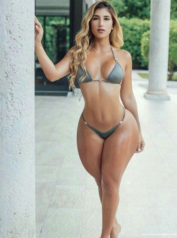 Vanessa latina anal