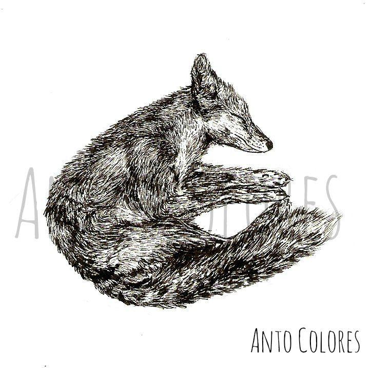 #fox #zorro #illustration #ilustracion #antocolores  www.instagram.com/anto.colores https://www.facebook.com/AntoColores/?ref=aymt_homepage_panel