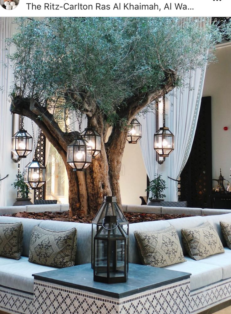 olive tree and bench as central feature for the outdoor courtyard