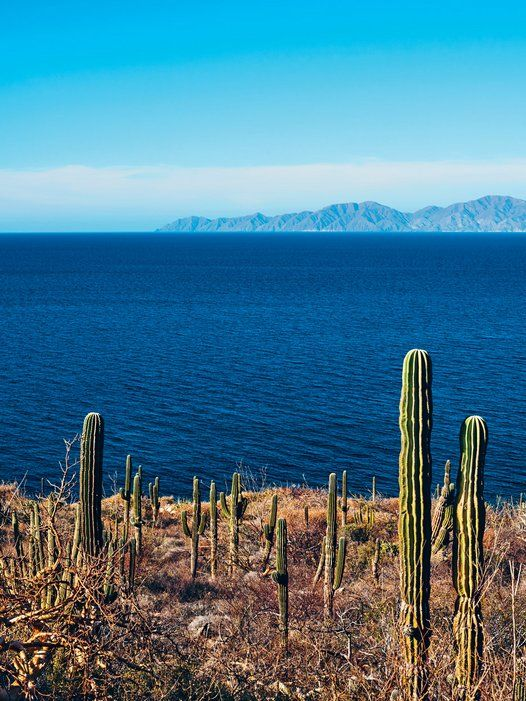 Baja Sur: Mexico's Most Colorful Region \ Photographed by Paola & Murray