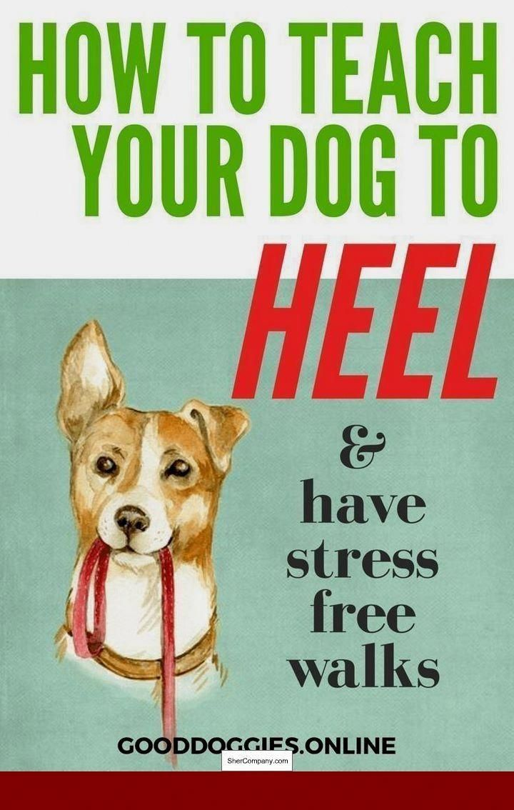 How To Train My Dog Not To Bark On Walks Doglovers