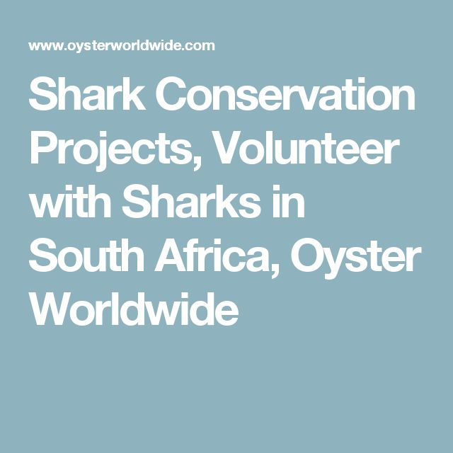 Shark Conservation Projects, Volunteer with Sharks in South Africa, Oyster Worldwide