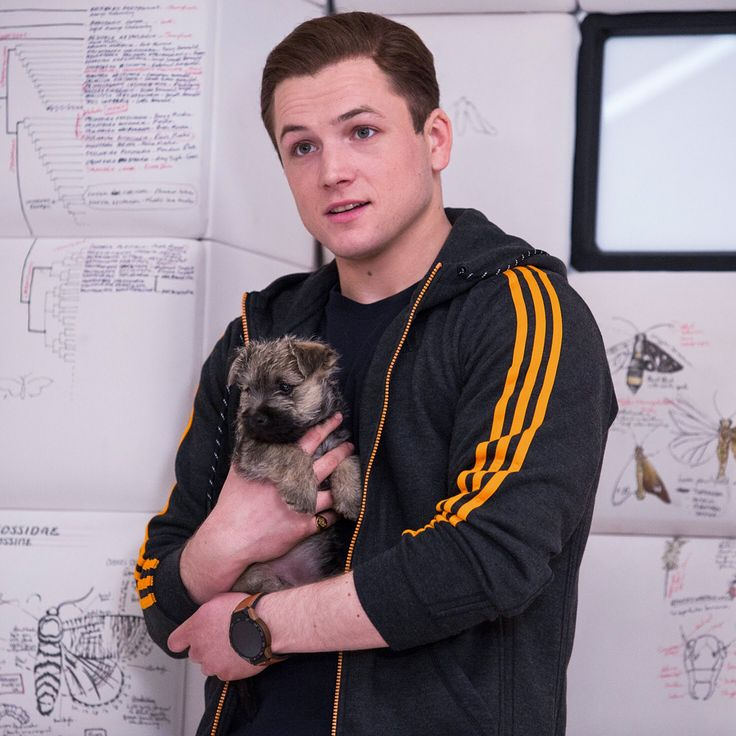 Taron Egerton Doesn T Like Dogs