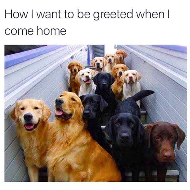YES OR NO?❤️ #petsofinstagram #petsagram #petlover #petoftheday #photooftheday #likesforlikes #cuteness #cutiepie #dogstagram #dogslife #beautiful #puppylove #puppiesofinstagram #puppylife