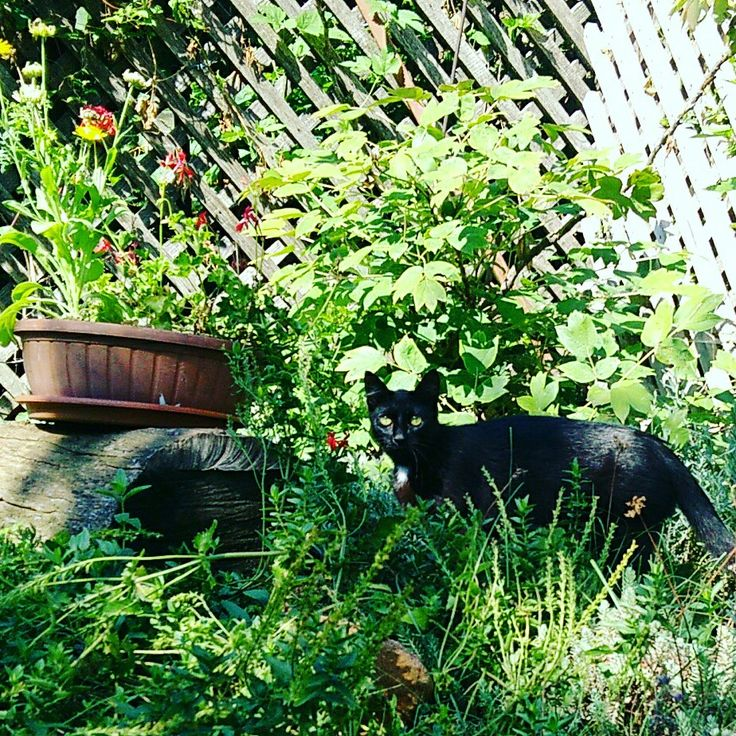 Little panther in the jungle