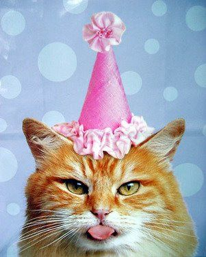 Cats and Birthdays | HOT ! but Happy with lots of plans!