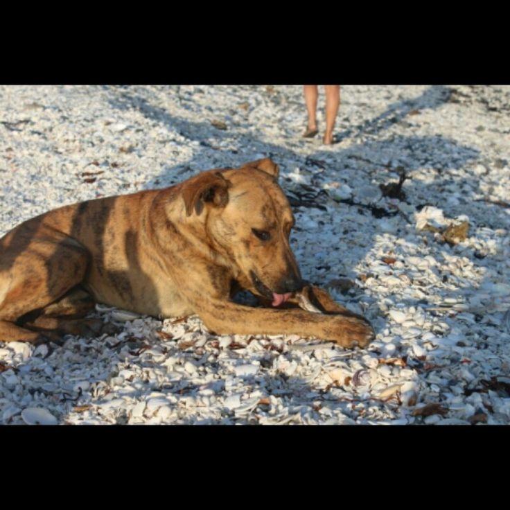 Perro callejero en Playa de conchitas.