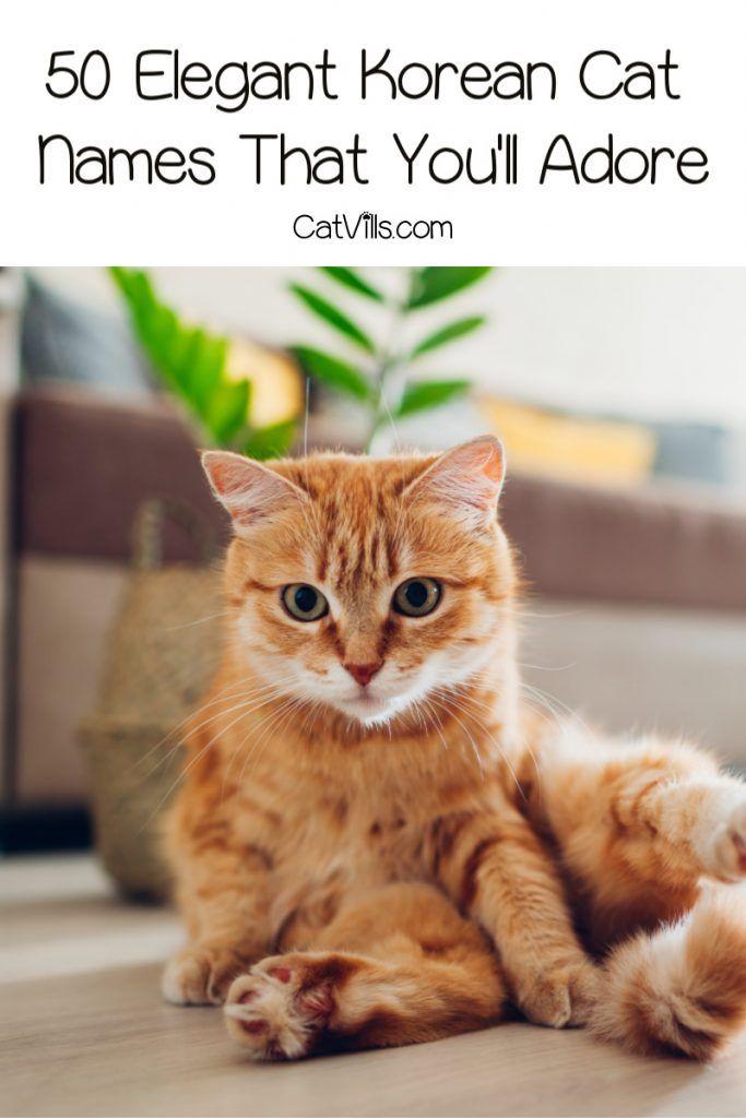 50 Elegant Korean Cat Names For Your New Kitten Catvills In 2020 Cute Cat Names Cat Names Grey Cat Names