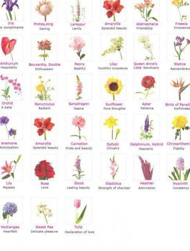 An Overview Of Different Flowers And Their Respective Meanings Flower Meanings Beautiful Flowers Photography Different Types Of Flowers