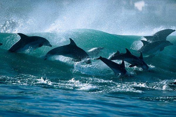 Sayonara Flipper - Where did all the dolphins go?