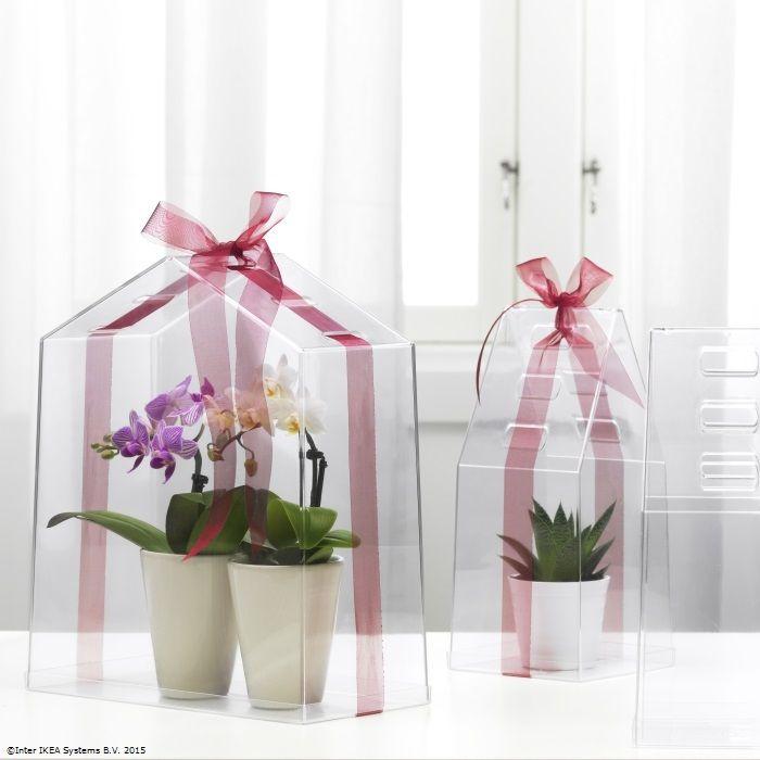 Toamna, plantele tale preferate se adăpostesc acasă.
