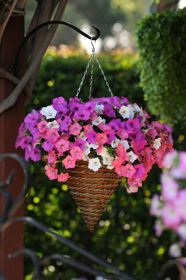 17 best Hanging Baskets images on Pinterest   Hanging baskets ...