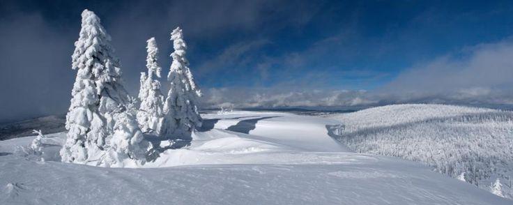 Luzný vrchol1373 m a Mokrůvka, Šumava
