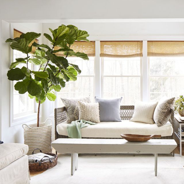 These Are The Best Indoor Trees For Every Room Of Your House Living Room Plants Indoor Trees Best Indoor Trees #palm #tree #for #living #room