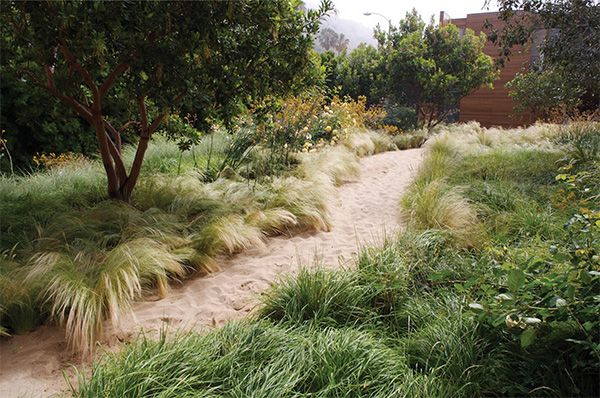 An informal sandy walk connects the Main House entry with the Lap Pool and Guest House. A low maintenance, drought-tolerant planting palette reduces the carbon footprint.