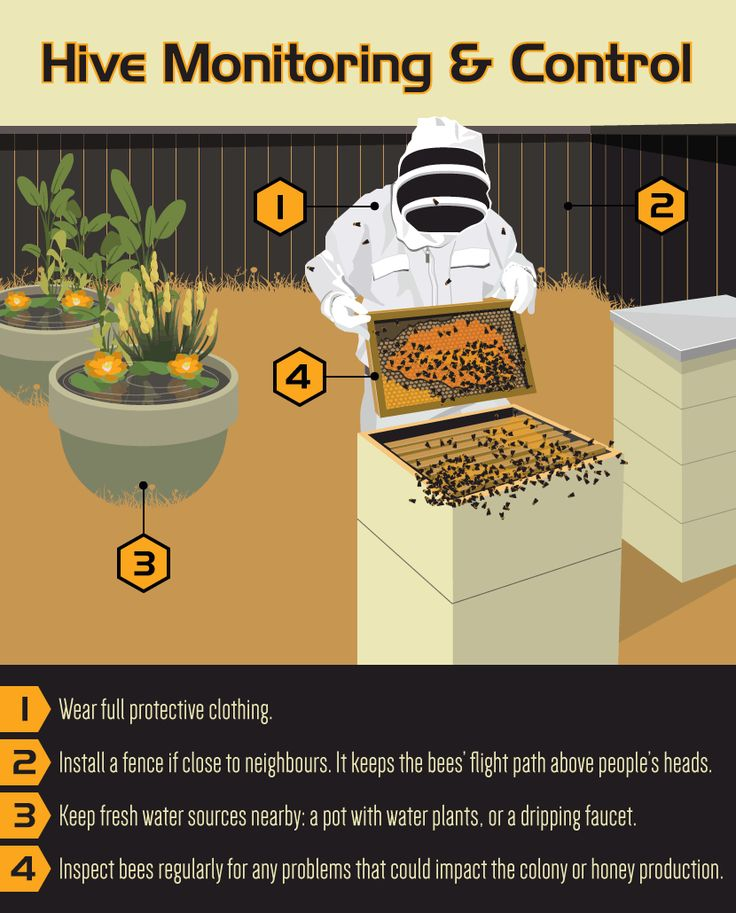 how to raise honey bees for beginners