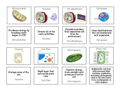Plant and Animal Cell Organelles Memory Game from Sandy's Science on TeachersNotebook.com (3 pages)