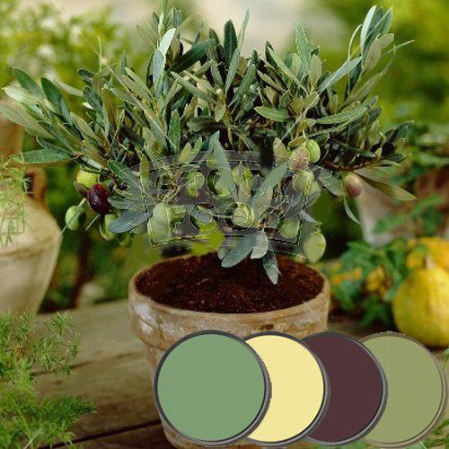 Olive Grove Paint Palette - Farrow & Ball Brinjal, Olive, Folly Green, Hound Lemon