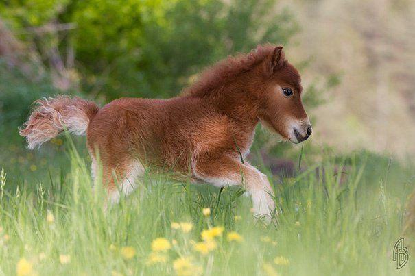 20 chevaux miniatures à ne surtout pas montrer à vos enfants (c'est pour vous) | Buzzly