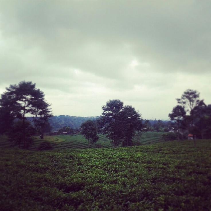 Perkebunan teh margoyoso, karanganyar