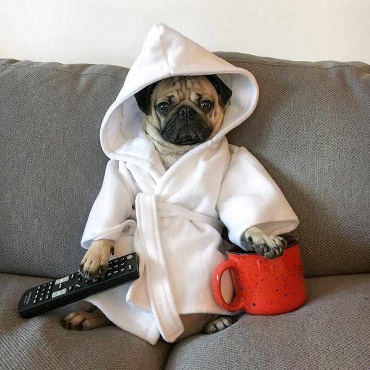 """Cancel all my appointments today"" -#lovepugever #pug #pugsofinstagram #pugs #pugpuppies #pugpuppy #puggle #puglia #puglife #pugilato #puglicious #puglive #pugdaily #pugchat #pugsrock #pugrescue #pugpower #pugster #pughugs #pugsproud #pugliatop #pugtohug #puglove #puglyfe"