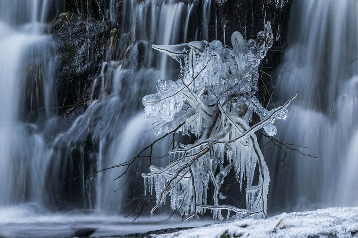 In the rural community of Errington, on Vancouver Island, BC there is a popular landmark named Triple Falls (on Morrison Creek). While hiking here in early December, I was amazed to see this icy traveler, though when he heard my lumbering approach, he quickly made his way across the shelf between the falls. I was able to capture our chance encounter before he vanished into the twilight. Fading light, a tripod and slow shutter allowed me to give the image a magical, ethereal look.
