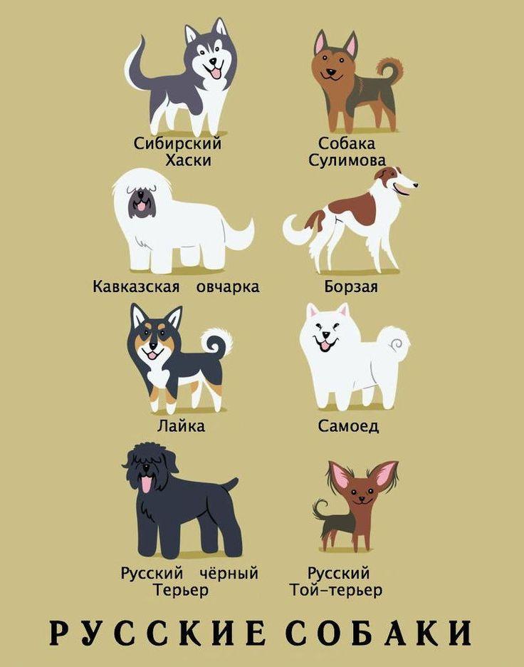 как имена собак с картинками именно так
