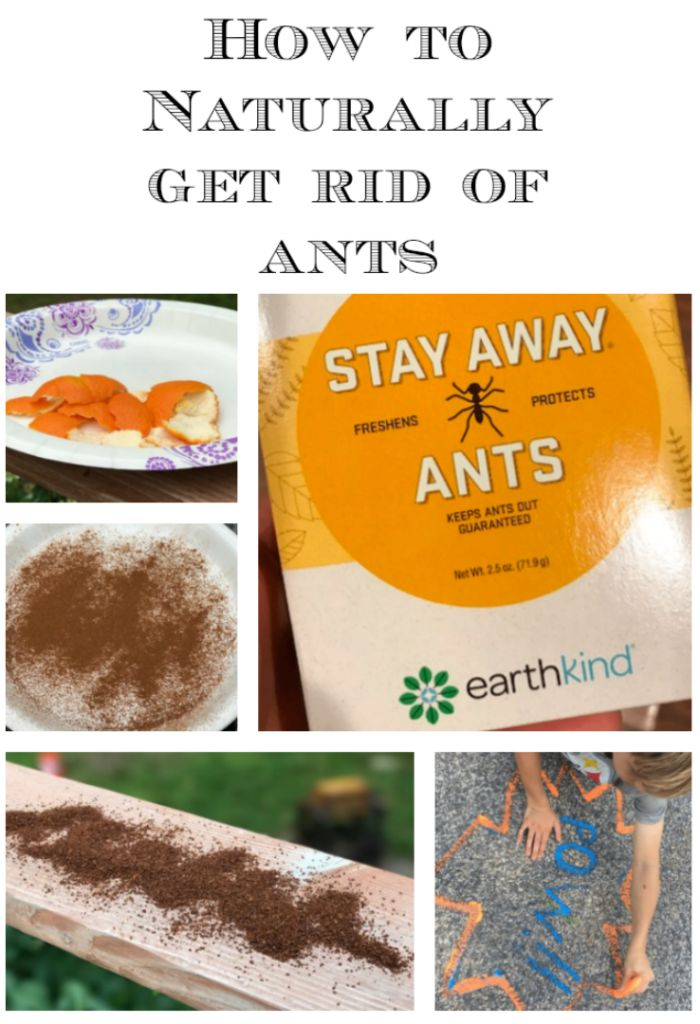 how to get rid of outdoor ants naturally