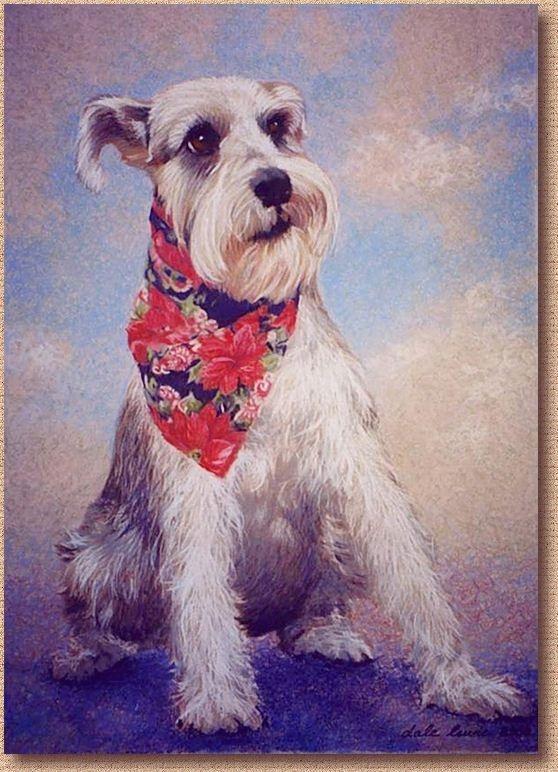 """Pet Portrait of """"Midas"""", a Beautiful Miniature Schnauzer"""