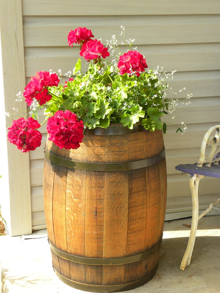 Red geraniums in old wooden barrel.