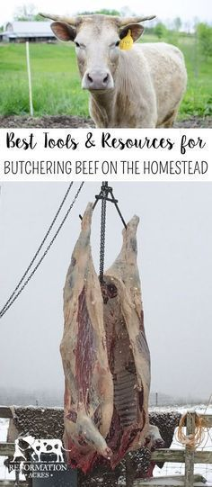 Best Tools and Resources for Butchering Beef on the Homestead