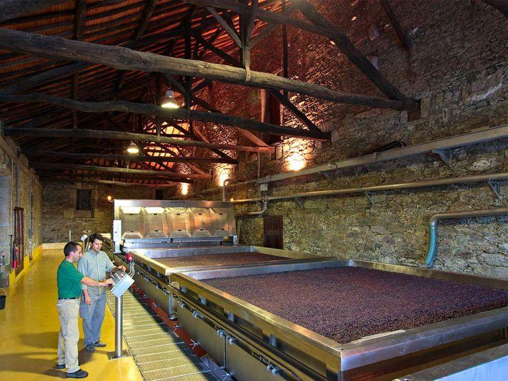 Wine Making · Warre's