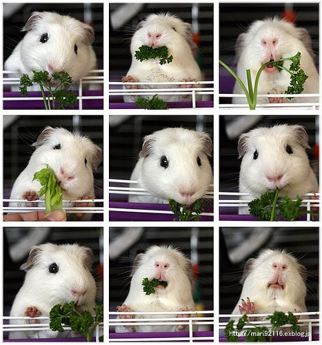 I know it's not a rabbit but eats so well its veggies..<3