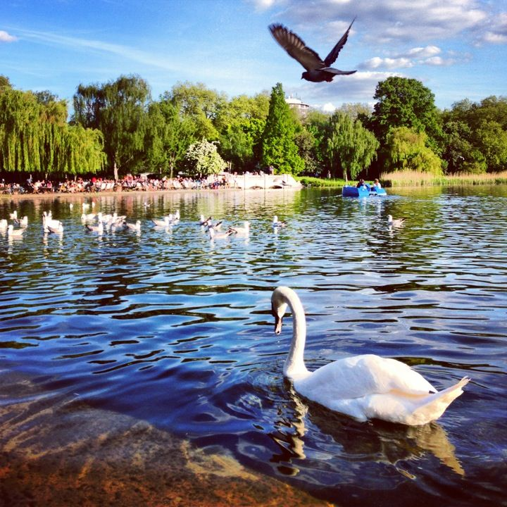 Hyde Park  Skip the row boats and relax with pedal power. The pedalos are hired by the hour. There are few more pleasant ways to spend a hot afternoon than by slowly splashing around a city centre lake. Tube: Green Park or Hyde Park Corner