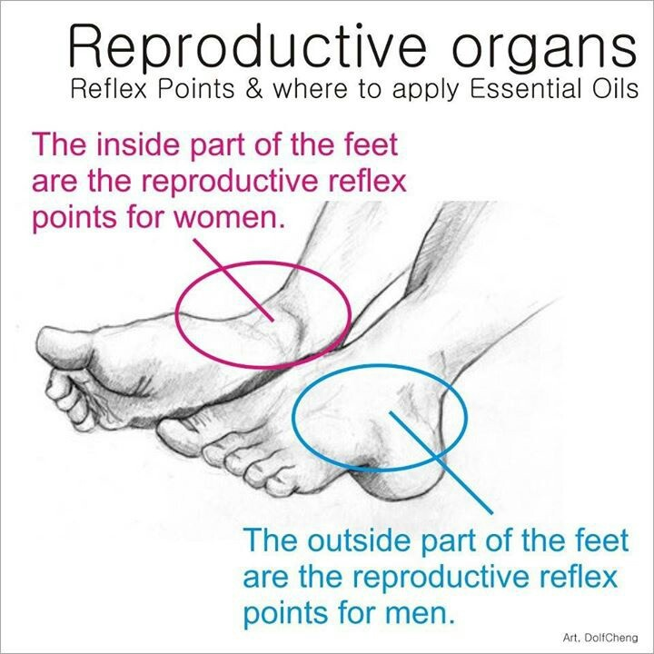 Where to apply oils for reproductive organs... I only use and recommend Young Living! www.youngliving.org/sbishop74