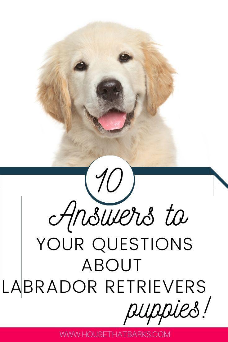 Popular Golden Retriever Names Of 2020 Dog Names Best Dog Names Boy Dog Names