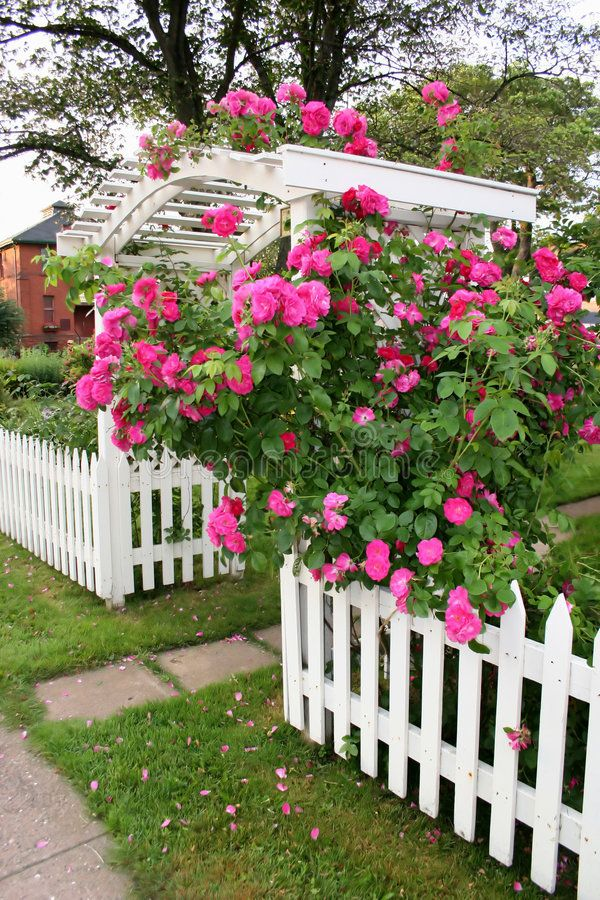 Rose Arbor A Rose Arbor And Picket Fence In A Country Garden