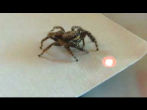 Best Funny Videos Of Animals Chasing Lasers Compilation 2014 - YouTube