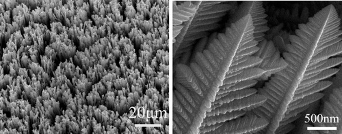 synthesized dendritic single-crystalline Ag/Pd alloy nanostructures || credit goes to Dawei Wang, Tao Li, Yang Liu, Jianshe Huang, and Tianyan You || Large-Scale and Template-Free Growth of Free-Standing Single-Crystalline Dendritic Ag/Pd Alloy Nanostructure Arrays