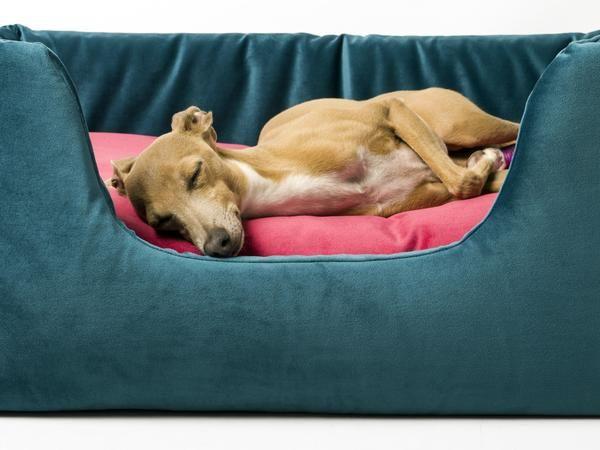 72 best dog bedscharley chau images on pinterest